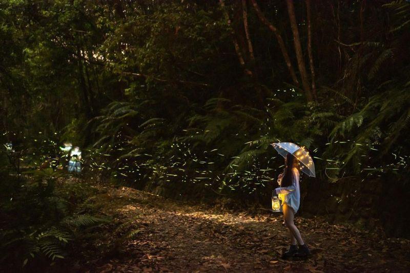 ▲蓮華池是熟客心中賞螢火蟲的第一秘境。(圖/love06250709提供/Instagram)