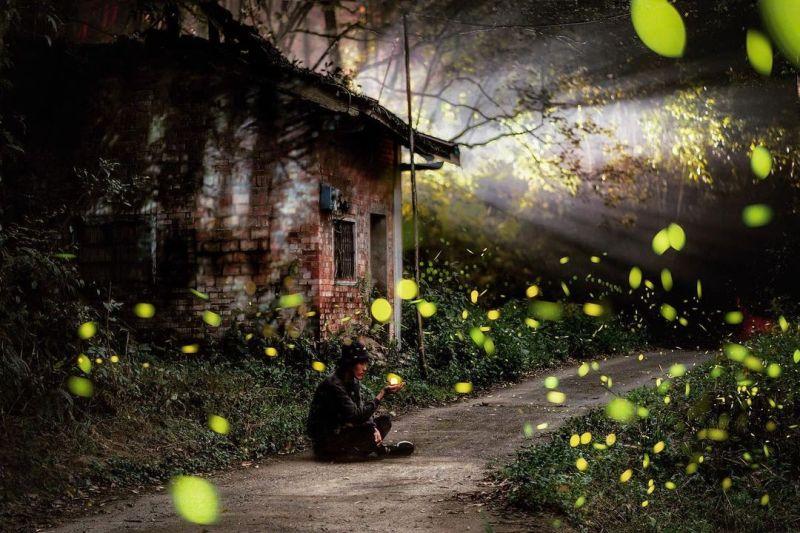 ▲漫天飛舞的螢火蟲一閃一閃,猶如俏皮的綠色精靈開心地和遊客打招呼。(圖/@chun_vision提供/Instagram)