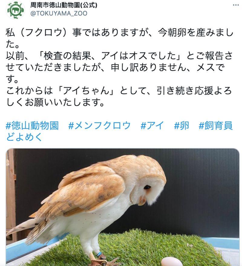 ▲日本徳山動物園承認弄錯了,小愛原來是女生啦。(圖/翻攝自@TOKUYAMA_ZOO的推特)