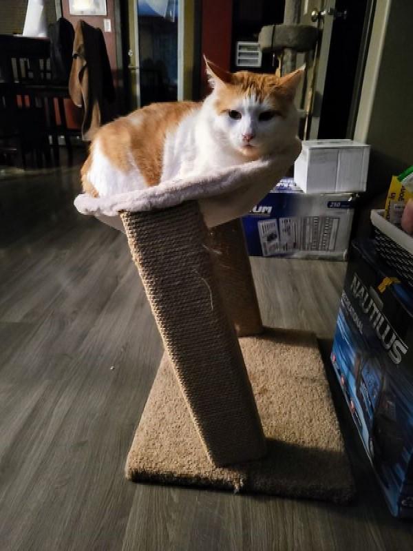 ▲只是這天布蕾發現喬治躺在貓塔吊床上,底下的柱子已經歪斜,但是牠仍然照樣窩好窩滿!(圖/FB