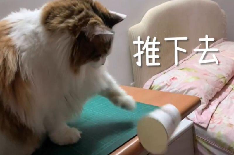 影/94要動手!貓皇「愛乾淨」幫你通通推下桌?