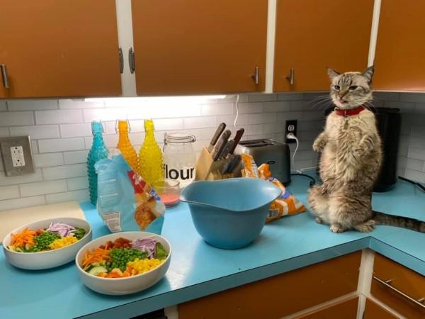 ▲這天牠跳到櫃台上,發現眼前只有兩盤「蔬菜」時,感到不太滿意(圖/FB