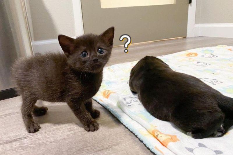 小貓初見「長相奇怪的貓」 好奇詢問:要交朋友嗎?