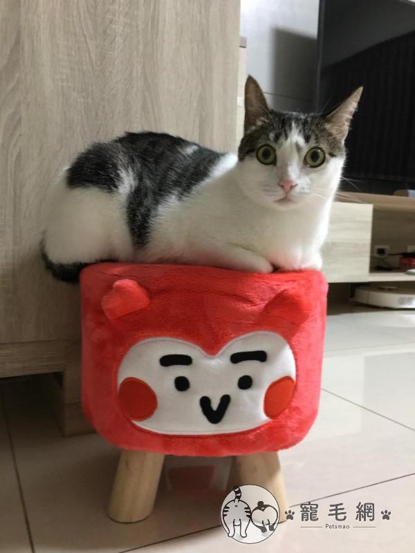 ▲「咪米」是一隻個性像狗的貓(圖/粉專Mimmy