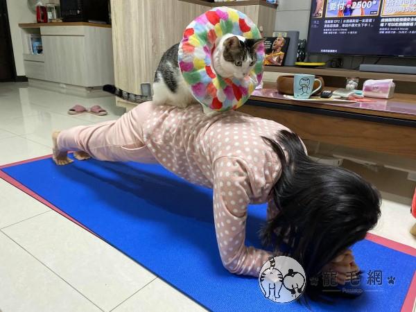 ▲這天牠竟然趁林小姐練習棒式時,跳到背上幫忙「加強核心訓練」!(圖/粉專Mimmy