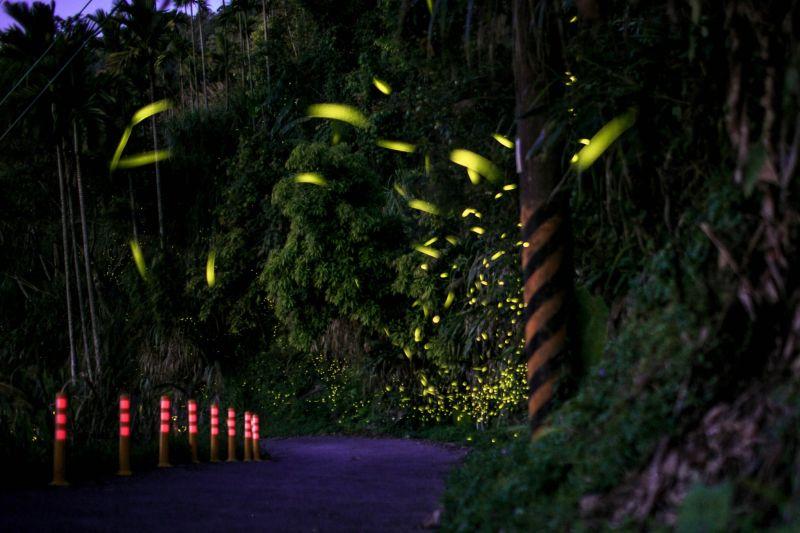 ▲每年的螢火蟲季節只見步道旁流螢點點、光芒稍縱即逝(圖/台南市觀旅局提供)