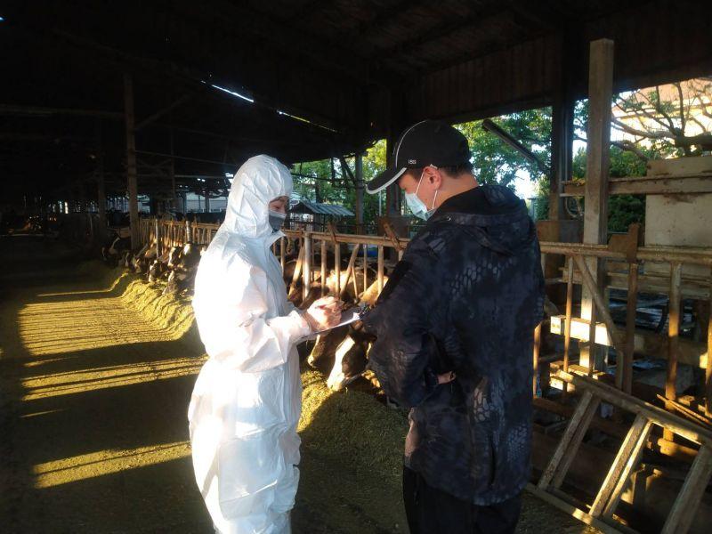 新北市林口區肉牛場傳出台灣本島首例確診感染牛結節疹的病例,牛飼養頭數全國第三的台南市也緊急啟動防範牛結節疹防疫作為。(圖/台南市政府提供)