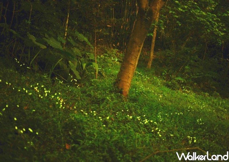 ▲只要沿著虎山生態步道賞螢沿途就有設有3處定點解說站,由專業解說員講解螢火蟲及溪流生態。