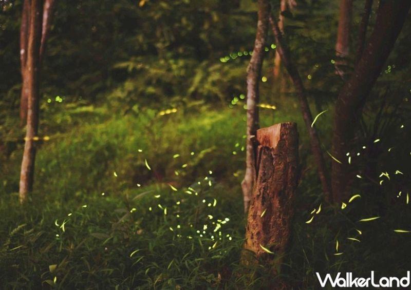 ▲每年四月份不能錯過的浪漫景非「賞螢」莫屬。 (圖/Taipei Walker提供)