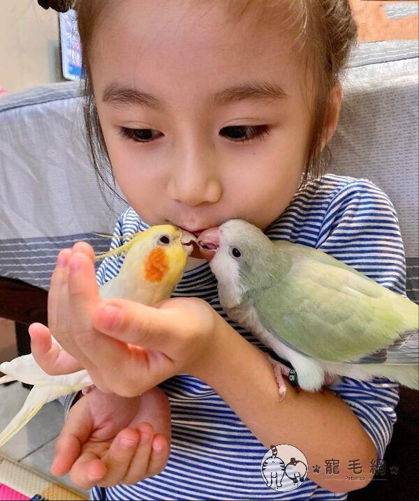 ▲兩隻鸚鵡在小主人面前很會爭寵!(圖/網友May