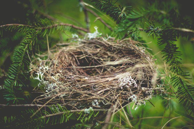 ▲台灣有許多鳥類會將鳥巢築在冷氣或窗邊,這名女網友卻發現自家陽台旁的鳥巢卻不是那麼簡單。(示意圖/取自《Pixabay》)