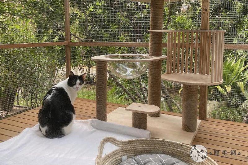 老爸為女兒愛貓打造豪華戶外貓籠,收買貓咪與女兒的心!(圖/網友授權提供林臻)