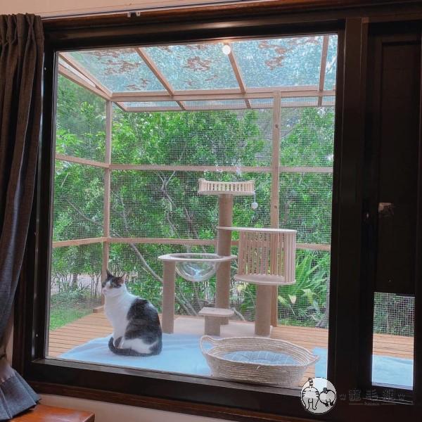▲廣大落地窗讓屋內的林小姐也能清楚看到貓咪們玩耍的模樣(圖/網友授權提供林臻)