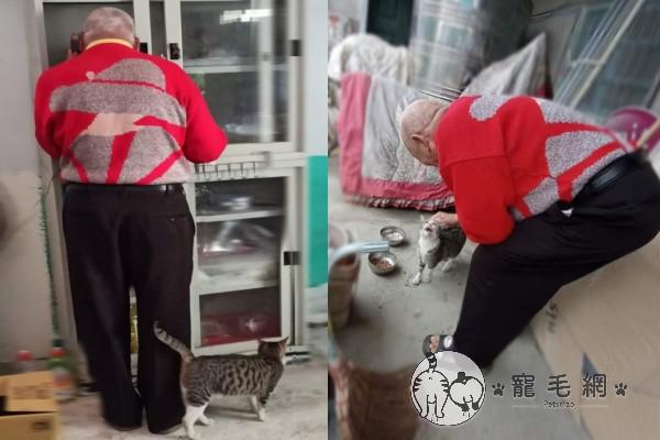 ▲咪醬因為貪吃,漸漸黏上阿公,阿公也非常疼牠(圖/網友Yi