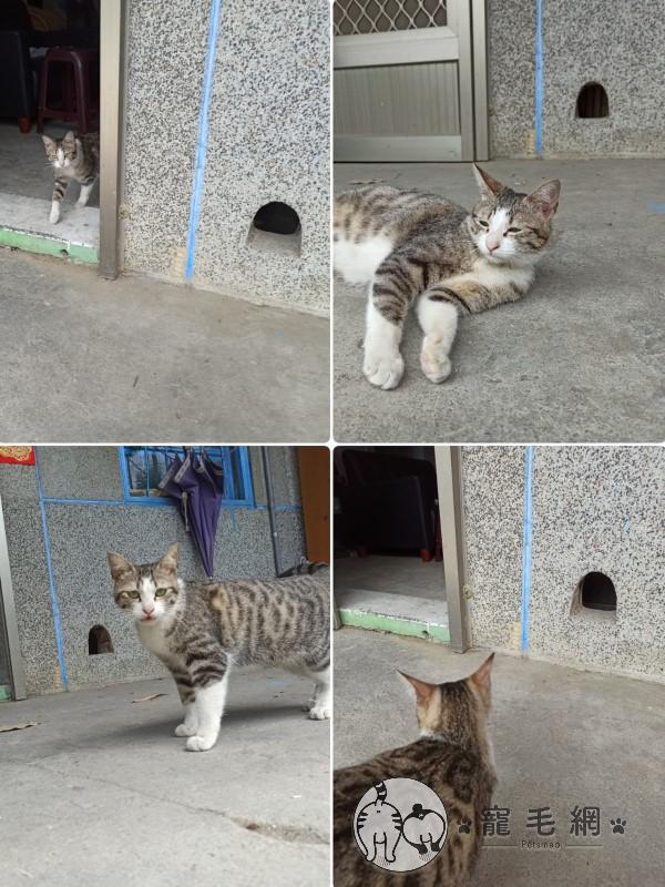 ▲疼愛咪醬的阿公把塵封已久的貓洞打開,方便牠自由進出(圖/網友Yi