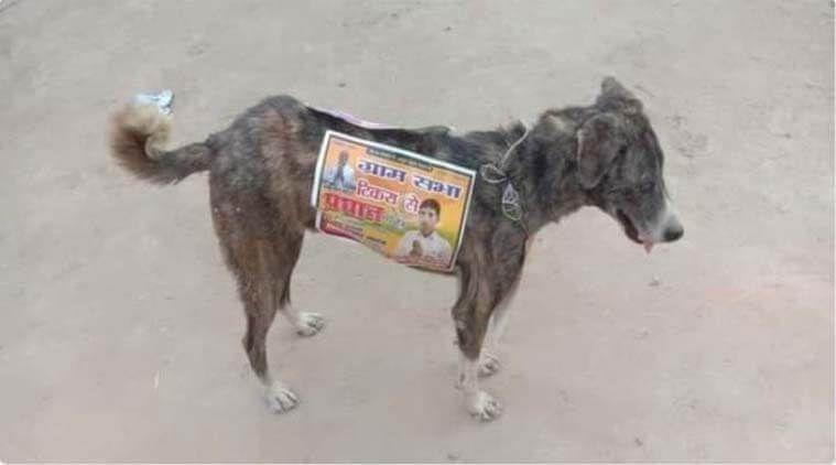 印度選舉亂象