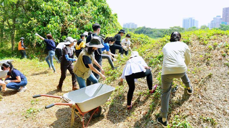 ▲青年局陸域組志工清除外來種植物。(圖/高市府青年局提供)