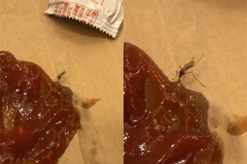 ▲許多網友認為,這隻蚊子是公的,因為公的不會吸血。(圖/翻攝自《路上觀察學院》
