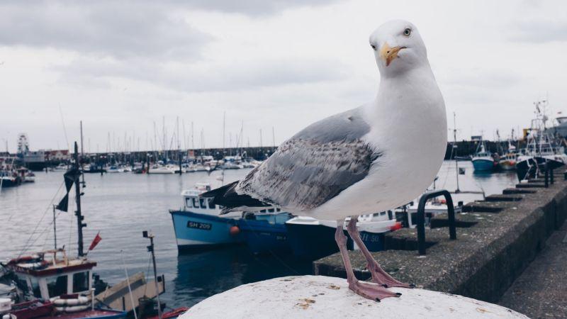 ▲有日本網友分享,一隻海鷗囂張的騎在同伴身上,短短9秒的影片在推特上瘋傳。(示意圖/翻攝自《pexels》 )