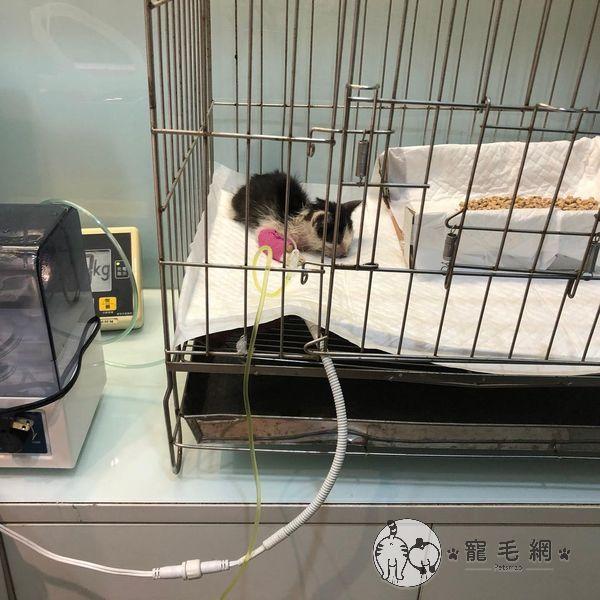 ▲獸醫說安康的狀況不樂觀,盡全力治療牠。(圖/Instagram