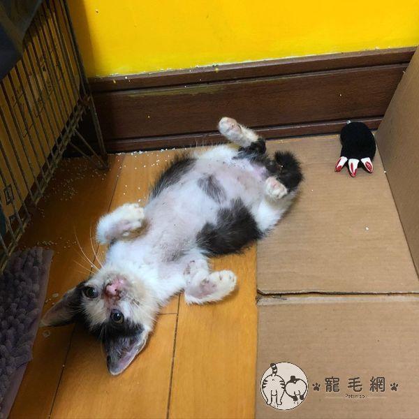 ▲安康漸漸康復中(圖/Instagram