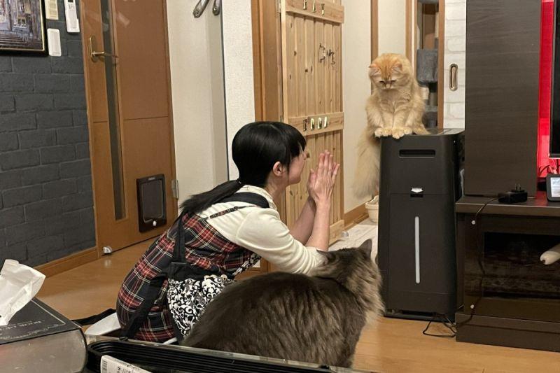 好委屈!貓皇被關廁所逃出後「眉頭深鎖」 奴才:原諒我們啦!