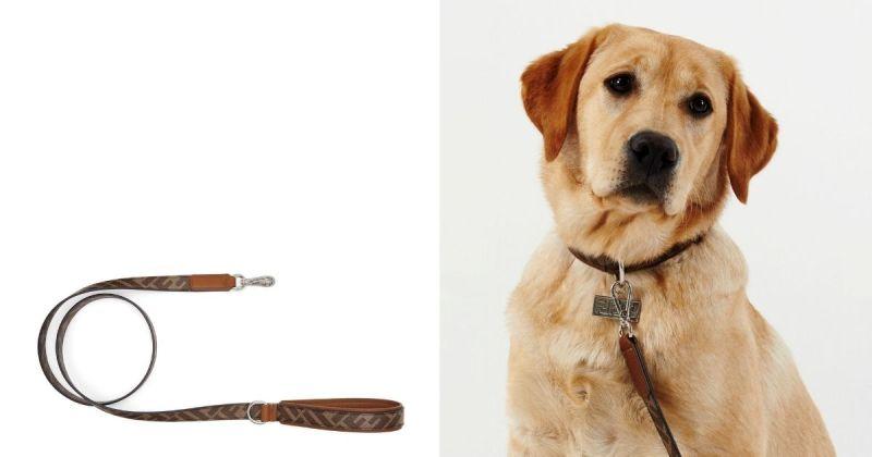 ▲寵物飾品中包括手提袋和項圈。(圖/Fendi提供)
