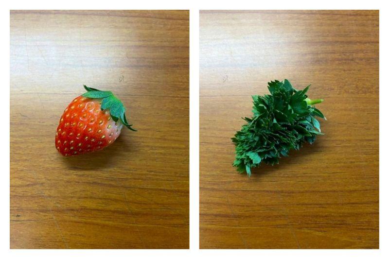 ▲日本一位網友觀察草莓「放到發芽」的畫面,照片曝光引發熱議。(圖/翻攝自@masanori_nozawa的推特)