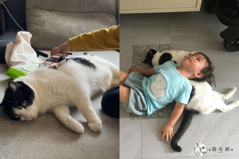 ▲網友楊小姐家養了一隻賓士貓,任憑小孩在自己身上玩車,名符其實的「天使喵」。(圖/粉專Mini&Cooper授權提供)