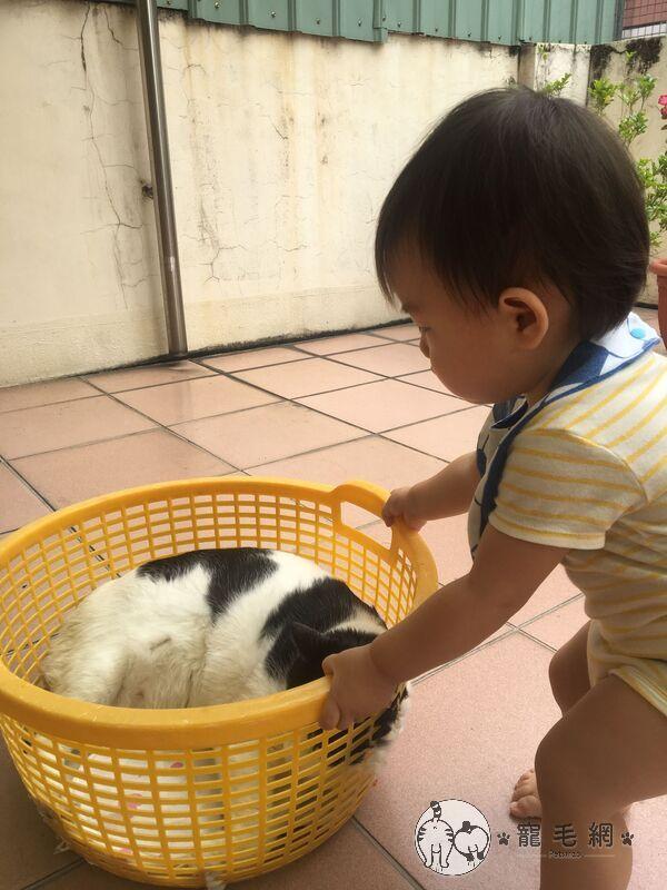 ▲賓士貓「Cooper」充當小主人的玩伴。(圖/粉專Mini&Cooper授權提供)