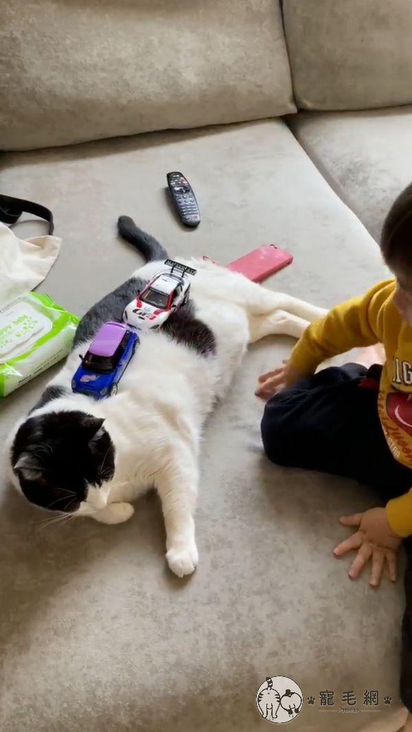 ▲甚至出借貓身體讓小主人「試車」。(圖/粉專Mini&Cooper授權提供)
