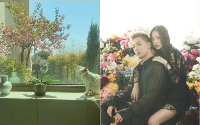 ▲BIGBANG太陽(右圖左)跟閔孝琳的愛巢十分豪華。(圖/翻攝MBC、Naver)