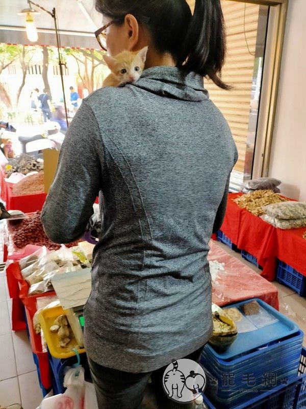 ▲由於王小姐白天在市場做生意,只好每天將牠帶在身邊,訓練當招財貓!(圖/網友梁姎妹授權提供)