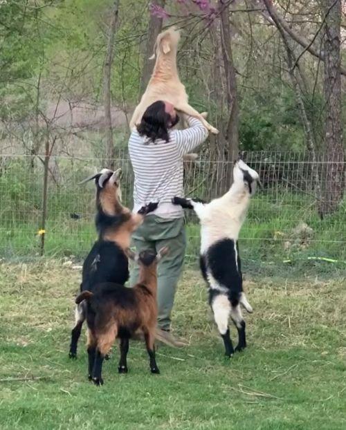 ▲男子把白羊抱起來,羊羊開心地開始吃樹上的花朵。(圖/Instagram@