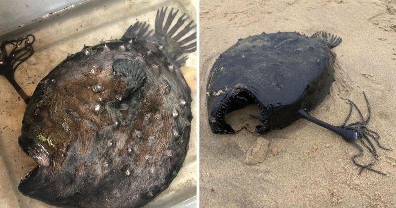 海底總動員怪魚浮出水面!加州公園讚嘆海洋的奧妙