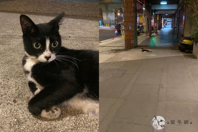 ▲在路邊遇到躺在地上的貓咪,女子決定來測試她可以靠多近!(圖/粉絲專頁@KytungRita授權提供)