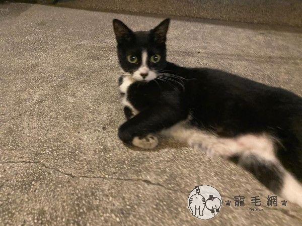 ▲貓貓的整張臉都能看得很清楚。(圖/粉絲專頁@KytungRita授權提供)