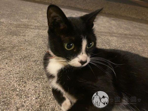 ▲已經快要貼到貓貓臉上啦!(圖/粉絲專頁@KytungRita授權提供)