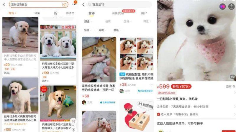 影/中國瘋「寵物盲盒」!蘇州郵政開箱驚見21死貓狗