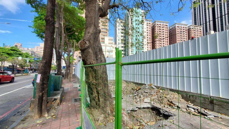 ▲捷運局表示將移除29棵屬於快速生長樹種的黑板樹,另2株30年以上樹齡的印度紫檀。(圖/高市府捷運局提供)