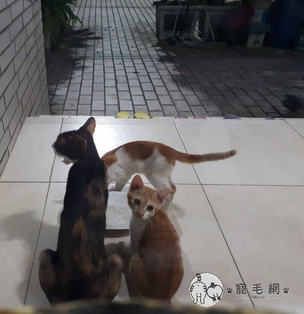 ▲浪浪母子:左邊是媽媽,右邊兩隻是小朋友。(圖/貓咪社團網友授權提供)