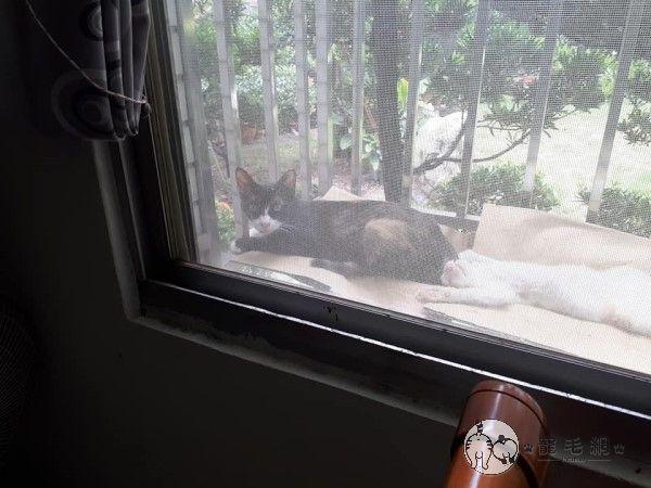 ▲高雄昨天上午大雨直下,貓咪們又來拜訪了!(圖/貓咪社團網友授權提供)