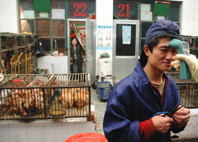 中國出現世界首例禽流感「鳥傳人」!專家:疫情風險極低