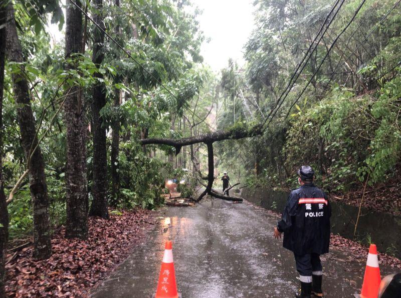 高雄山區路樹倒塌壓電線 警暫封路助搶通