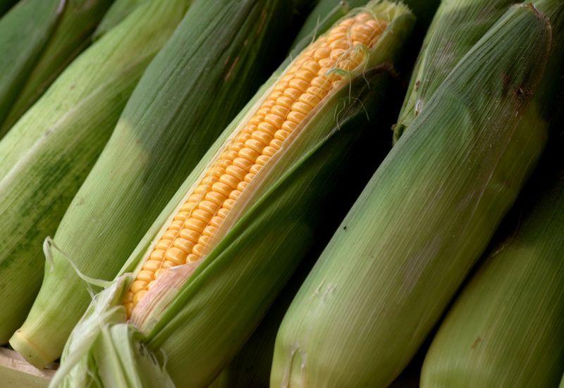 ▲老饕表示,煮玉米的時候「別把玉米外面的衣服(葉子)給脫了」。(示意圖/翻攝自Pixabay)