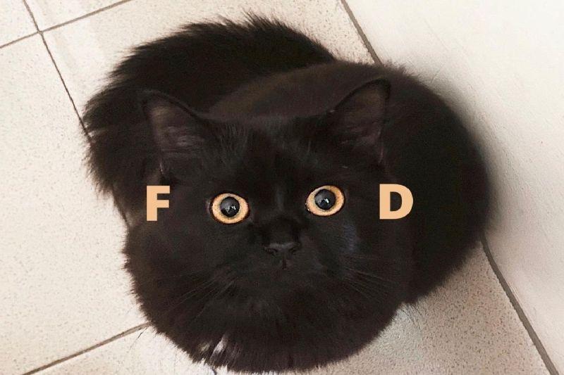 ▲黑貓用明亮的雙眼盯著主人,眼神中透露出對「FOOD」的慾望。(圖/Instagram@ xoxolunagirl)
