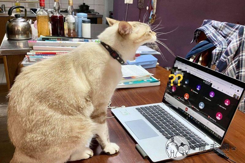 ▲人類哥哥居家線上上課,貓咪竟然在鏡頭前打呵欠!(圖/網友李曉芳授權提供)