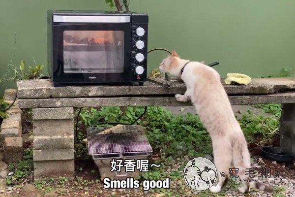 ▲還會適時地「亂入」馬麻的料理頻道,刷刷存在感。(圖/Youtube
