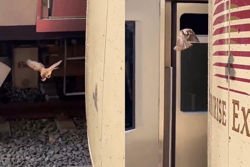 ▲原PO解答,因為火車在高速行駛時,經常撞到躲避不及的昆蟲,但這也讓麻雀可以飽餐一頓。(圖/翻攝自《@nobu_photobow》Twitter