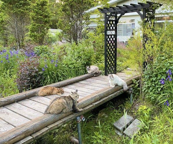 ▲推主@wataneko_tsuki在北海道鄉間經營一間森林咖啡廳,裡面還有許多貓咪。(圖/twitter